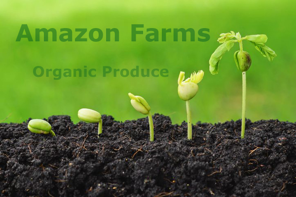 Amazon Farms - Orgaic Produce Experts